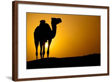 Sun Going Down in a Hot Desert: Silhouette of a Wild Camel at Sunset-l i g h t p o e t-Framed Art Print