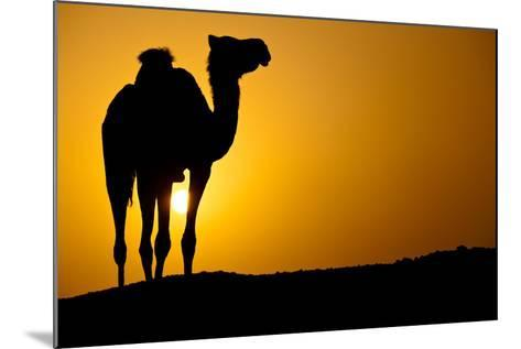 Sun Going Down in a Hot Desert: Silhouette of a Wild Camel at Sunset-l i g h t p o e t-Mounted Photographic Print