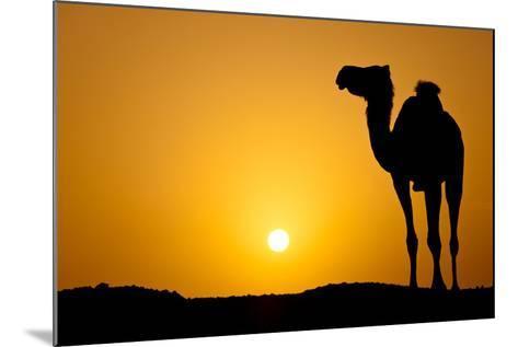 Sun Going Down in a Hot Desert: Silhouette of a Wild Camel at Sunset-l i g h t p o e t-Mounted Photographic Print