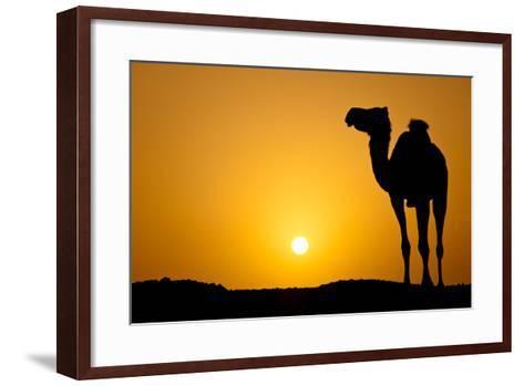 Sun Going Down in a Hot Desert: Silhouette of a Wild Camel at Sunset-l i g h t p o e t-Framed Art Print