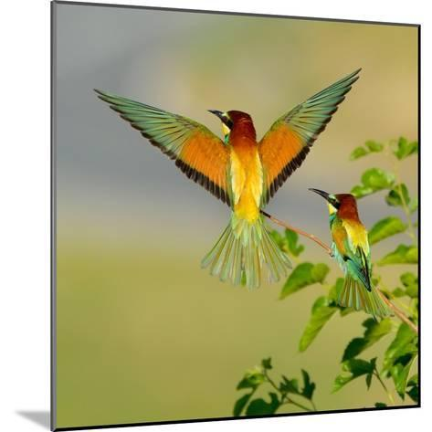 European Bee-Eater (Merops Apiaster) Outdoor-mirceab-Mounted Photographic Print