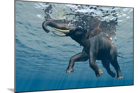 An Elephant Swims Through The Water-1971yes-Mounted Photographic Print