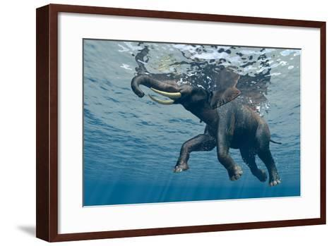 An Elephant Swims Through The Water-1971yes-Framed Art Print