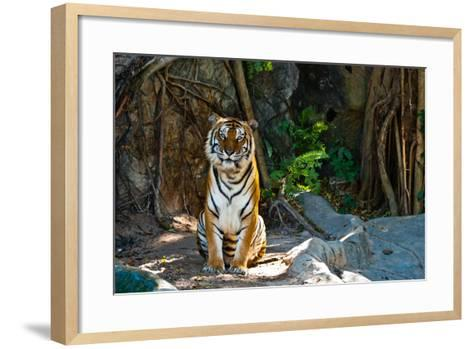 Female Wild Tiger From Thailand-sasilsolutions-Framed Art Print
