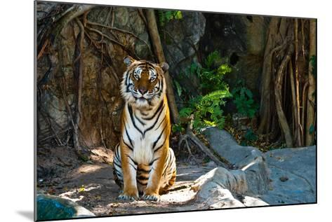 Female Wild Tiger From Thailand-sasilsolutions-Mounted Photographic Print