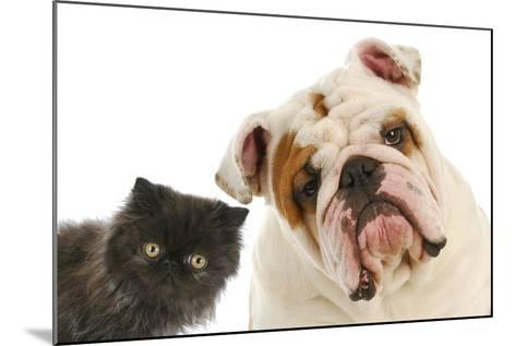 Dog And Cat-Willee Cole-Mounted Photographic Print