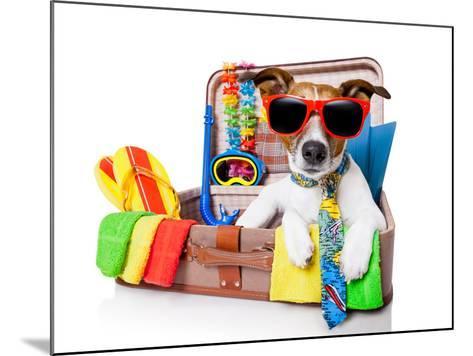 Summer Holiday Dog-Javier Brosch-Mounted Photographic Print