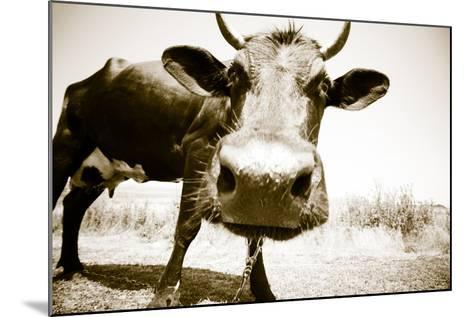 Funny Cow Stains-ongap-Mounted Photographic Print