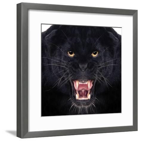 Black Leopard-Andrew Blue-Framed Art Print