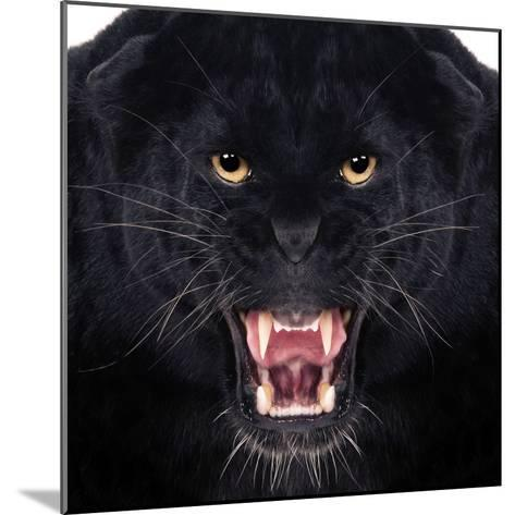 Black Leopard-Andrew Blue-Mounted Photographic Print