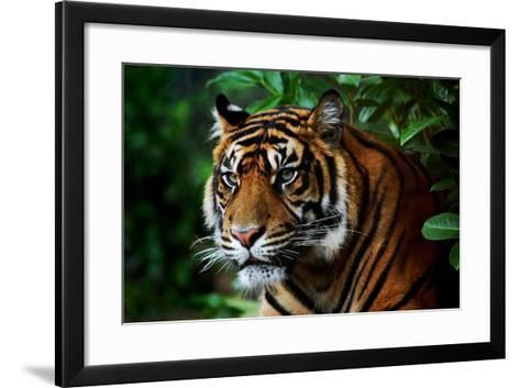 Tiger-Nanieke-Framed Art Print