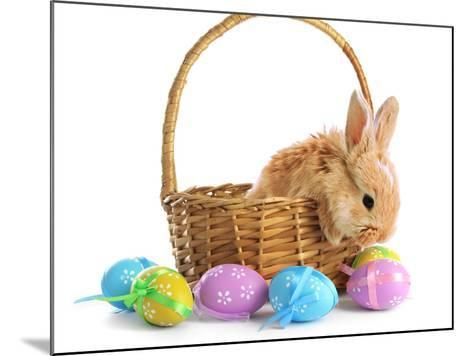 Fluffy Foxy Rabbit in Basket with Easter Eggs-Yastremska-Mounted Photographic Print