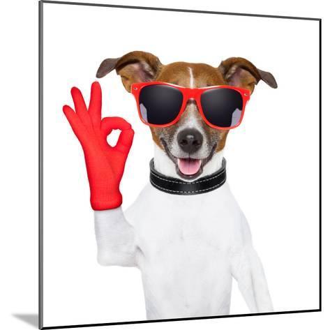 Ok Fingers Dog-Javier Brosch-Mounted Photographic Print
