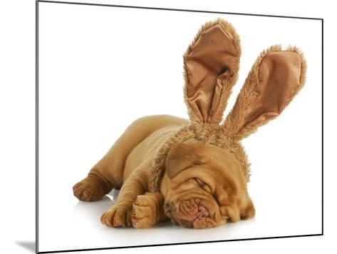 Puppy Wearing Bunny Ears - Dog De Bordeaux Wearing Easter Bunny Ears on White Background-Willee Cole-Mounted Photographic Print