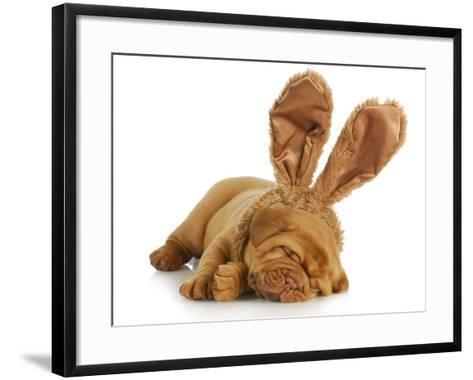 Puppy Wearing Bunny Ears - Dog De Bordeaux Wearing Easter Bunny Ears on White Background-Willee Cole-Framed Art Print
