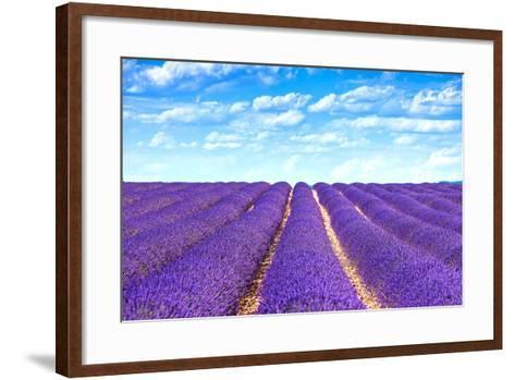 Lavender Flower Blooming Fields Endless Rows-stevanzz-Framed Art Print