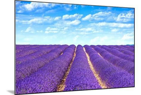 Lavender Flower Blooming Fields Endless Rows-stevanzz-Mounted Photographic Print