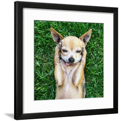 A Cute Chihuahua With His Paws On His Head Covering His Ears-graphicphoto-Framed Art Print