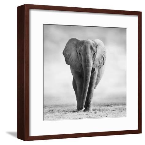 Elephant-Donvanstaden-Framed Art Print