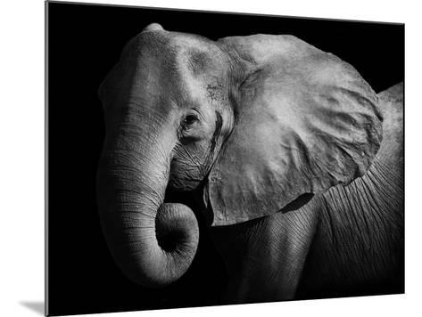 Elephant-Donvanstaden-Mounted Photographic Print