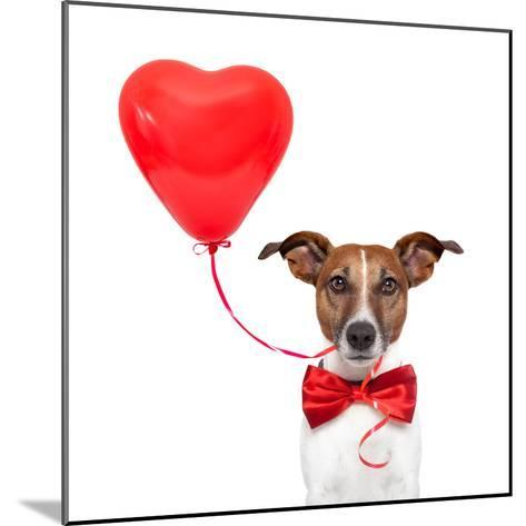 Dog In Love-Javier Brosch-Mounted Photographic Print