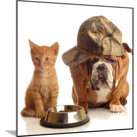 Bulldog and Cat at Food Dish Together-Willee Cole-Mounted Photographic Print