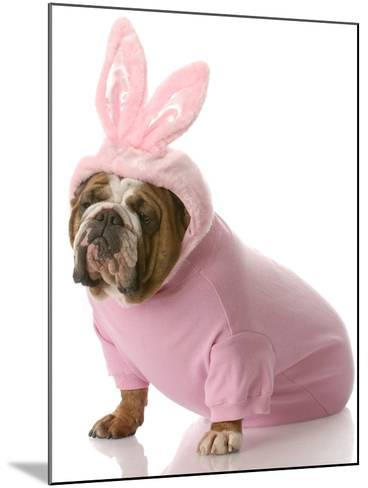 Dog Dressed Up as Easter Bunny-Willee Cole-Mounted Photographic Print