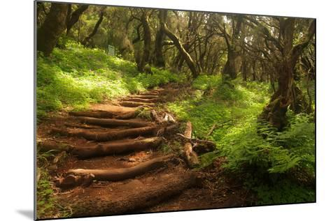 Forest Stairs--Mounted Photographic Print