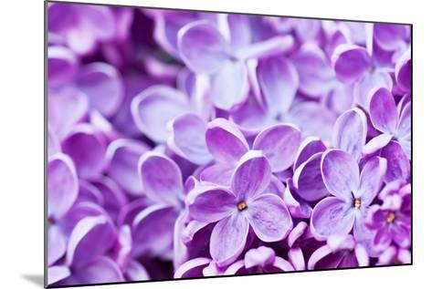 Lilac Flowers Background-Roxana_ro-Mounted Photographic Print