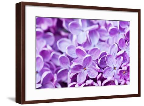 Lilac Flowers Background-Roxana_ro-Framed Art Print