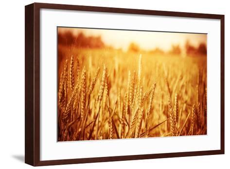 Golden Ripe Wheat Field, Sunny Day-Anna Omelchenko-Framed Art Print