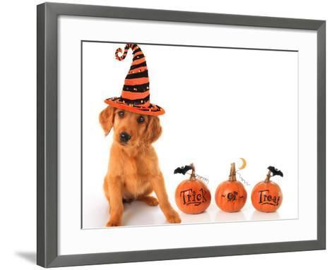 Cute Puppy Wearing a Halloween Witch Hat with Pumpkins-Hannamariah-Framed Art Print