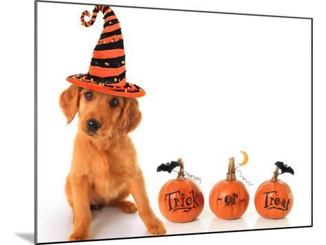 Cute Puppy Wearing a Halloween Witch Hat with Pumpkins-Hannamariah-Mounted Photographic Print