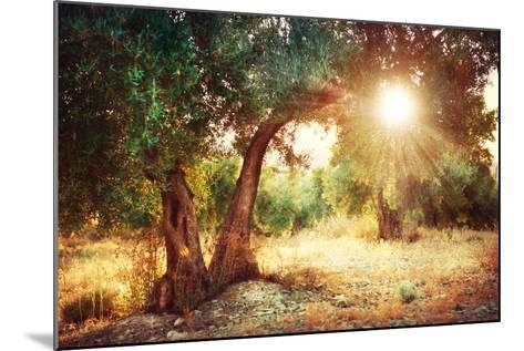 Mediterranean Olive Field with Old Olive Tree-Subbotina Anna-Mounted Photographic Print