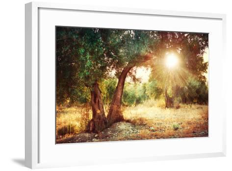 Mediterranean Olive Field with Old Olive Tree-Subbotina Anna-Framed Art Print