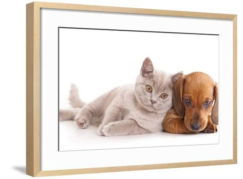British Kitten Rare Color (Lilac) and Puppy Red Dachshund-Lilun-Framed Art Print