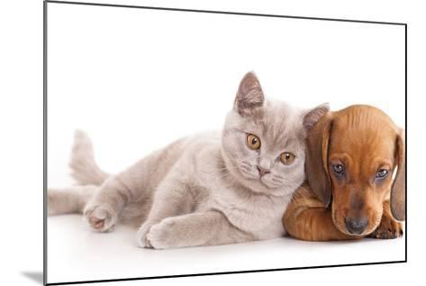 British Kitten Rare Color (Lilac) and Puppy Red Dachshund-Lilun-Mounted Photographic Print