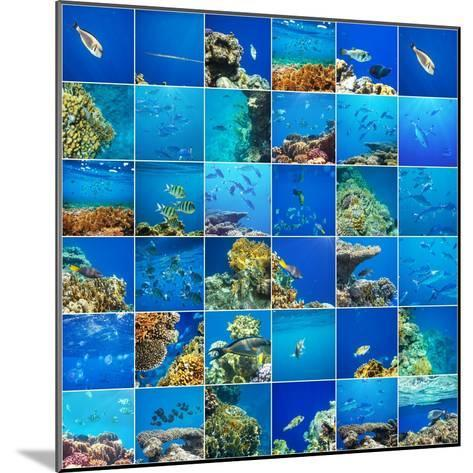 Coral Fish in  Red Sea,Egypt-Andrushko Galyna-Mounted Photographic Print