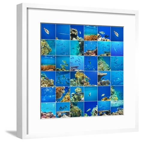 Coral Fish in  Red Sea,Egypt-Andrushko Galyna-Framed Art Print