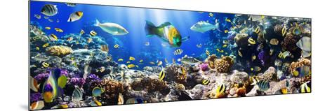 Photo of a Tropical Fish on a Coral Reef-Irochka-Mounted Photographic Print