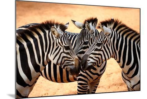 Three Zebras Kissing-worakit-Mounted Photographic Print
