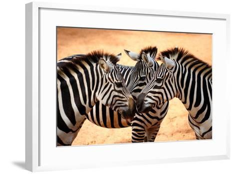 Three Zebras Kissing-worakit-Framed Art Print