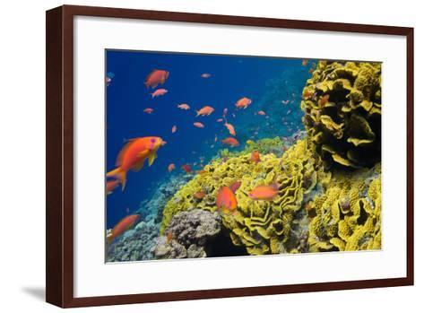 Coral and Fish in the Red Sea.Egypt-Irochka-Framed Art Print