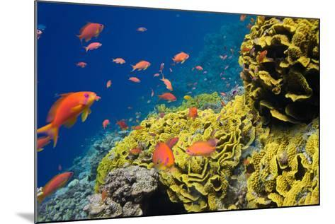Coral and Fish in the Red Sea.Egypt-Irochka-Mounted Photographic Print