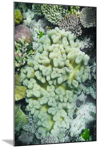 Hard and Soft Coral Reef-meisterphotos-Mounted Photographic Print