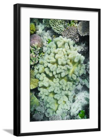 Hard and Soft Coral Reef-meisterphotos-Framed Art Print