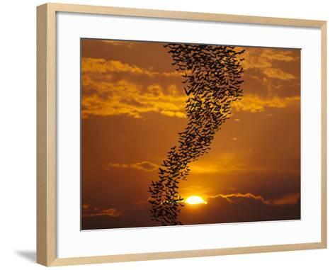 Bats Flying Againt Sun-Exsodus-Framed Art Print