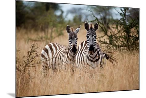Zebras on the Savannah-Gary Tognoni-Mounted Photographic Print