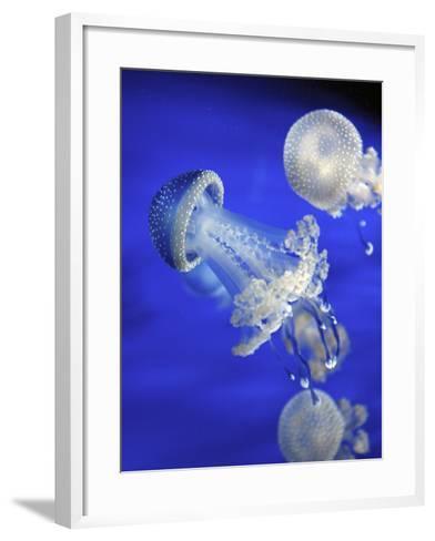 Jellyfish-canebisca-Framed Art Print