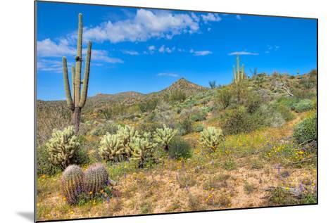 Blooming Desert-Anton Foltin-Mounted Photographic Print